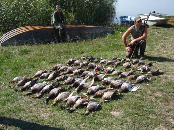 Сербия - Охота на утку и гуся