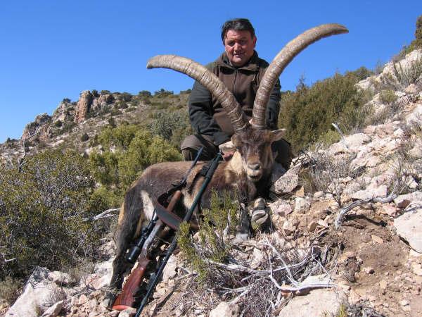 Spain - Ibexes