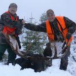 Canada – Moose