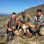 Russia – Chukotka Snow Sheep