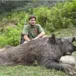 Iran – Wild Boar