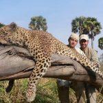 Tanzania – Leopard