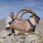 Turkey – Bezoar Ibex