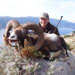 Croatia – Muflon Sheep