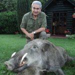 Croatia – Trophy Wild Boar Driven Hunt