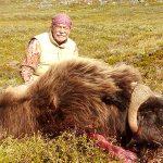 Greenland – Muskox