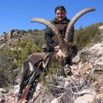 Spain – Ibexes