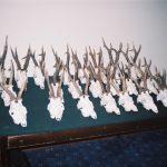 Serbia – 25 Roe Deer