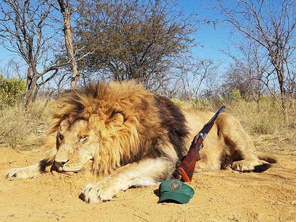 Resultado de imagen de Caza de leon